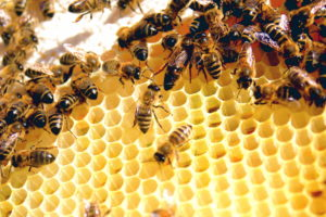 Worker Bees - Not for Me Image